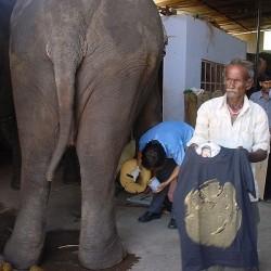 """""""Elephant"""" H vert/noir Col V"""
